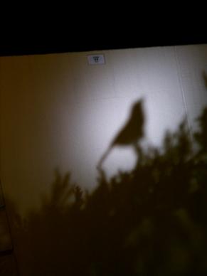 シャドーライティング 小鳥