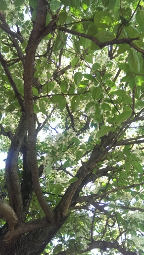 大きな樹幹