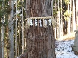 ご神木のしめ縄