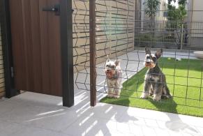 門扉とフェンス