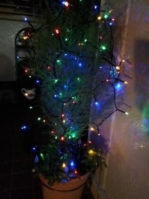 鉢植えGクレストに電飾